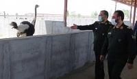 بازدید رئیس سازمان بسیج مستضعفین از طرحهای جهادی سمنان