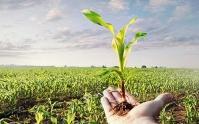 کشاورزی؛ محور توسعه
