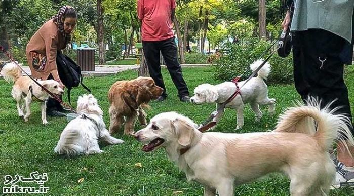 برخورد با سگگردانی خلاء قانونی ندارد