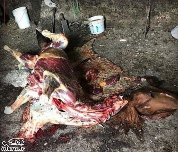 نیم تن گوشت اسب و الاغ غیرمجاز در تهران معدوم شد